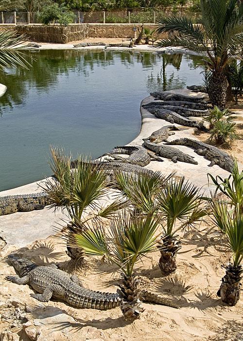 Djerba_Ferme.Crocodiles