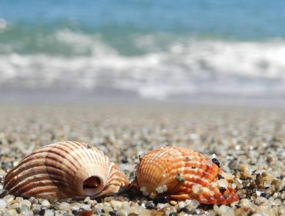 Les plus belles plages d'Algérie #2