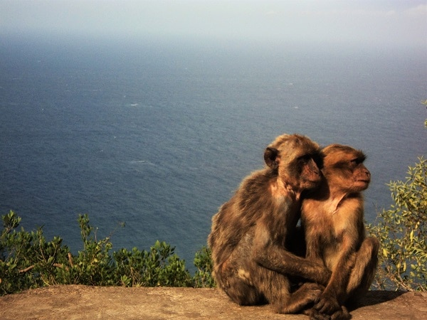 mont des singes béjaia algérie
